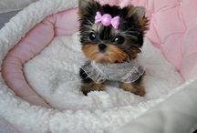 Animals and Cuteness
