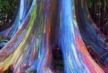 Nietypowe drzewa - Anomalia
