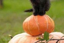 Fekete cica