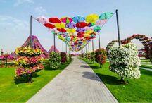 taman bunga / miracle garden dubai