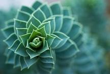 Nature&Shapes / The Perferct Geometrical Shapes insider the nature