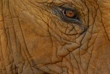 Wildlife / Wildlife photography by Martin Heigan.