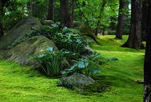 Moss gardens / by Judy Henriques-Evans