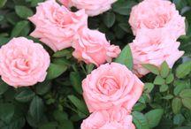 fleurs /     Les relations c'est comme les fleurs Il faut y faire attention, sinon elles meurent.