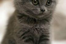 Dostdogcat..