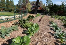 Farming for Food / by Rochelle Rochelle