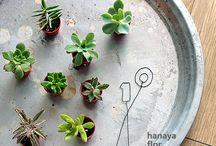 植物、花 / 植物たち