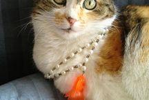 nemiciamici / Brillantissimi pesci rossi accompagnati da lucide perle color Kultra. Non ne trovate di uguali!! Guest star : Spugna