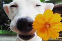 Fotos do cão