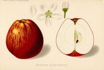 Obrázky -  ovocie a zelenina