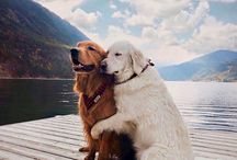 The Cutest Dogs Ever