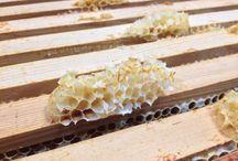 Bijen & Honing / Landgoed de Horst heeft haar eigen bijenvolk, die hun eigen honing produceert!