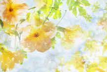 Spring / Springtime, new life, greenery, brihtness...