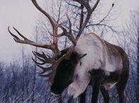 jelenoviti