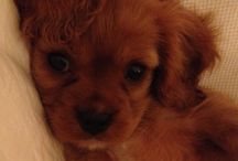 Like my Pippa pup :)