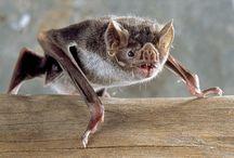 Ref: Bats