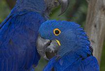 bird ara