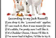 Jack russells