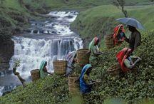 Steve McCurry's Amazing Work / by Cierra Cameron