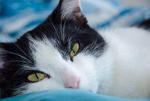cats / najukochańsze zwierzę świata