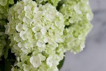 Fresh flower tips / Tips on how to make cut flowers last.
