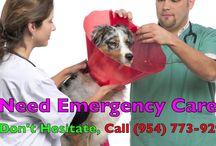 Emergency Vet Fort Lauderdale FL
