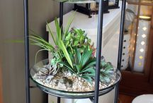 Indoor outdoor plants idea