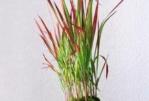 ine rastlinne fajnotky