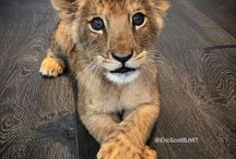 Save wild cat