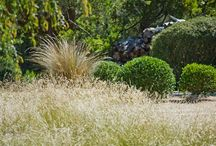 Fiona Brockoff - Coast & Country Landscape Design