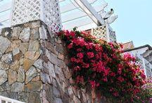 Flowers Oakville, Brampton, Milton GTA Cruise Travel Agency