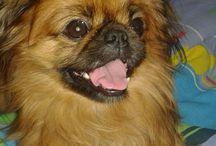 My sweet doggy
