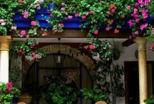Juliette balcony plants