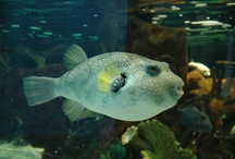 The Blue Planet Aquarium / Local attractions when staying in our 5* Forest Lodges