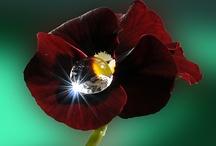 gentle beauty / by Linda e