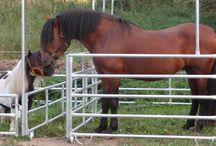Omheining paard pony