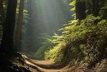 through the woods.......