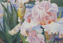 iris tuin en watercolor