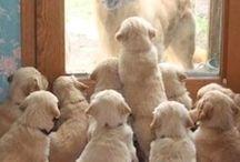 Cachorros/Puppies