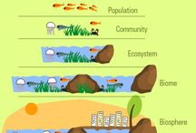 Ecosystem Teaching Resources