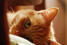I love cats ❤️
