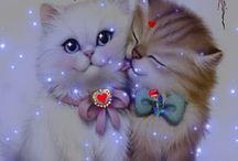 sevimli kedi resimive videoları