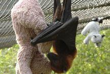 Bats for #echolocation / Echolocation