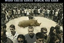 Save the Rhino - dont turn your back on it please help