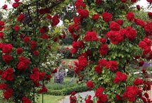 Decoração de rosas