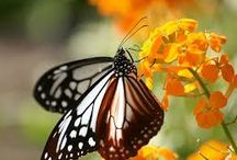 butterfly and flower 1