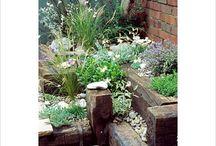 Patio and Bedding Garden