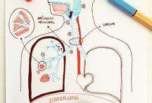 corpo sistemas