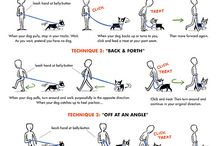 dog trainings