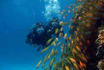 DIVING FOREVER-Deutsche Tauchschule Hurghada / Unsere deutsche Tauchbasis bietet Tauchausflüge in Hurghada,Wählen Sie von dem was Sie wollen: Schnuppertauchen, Tauchkurse, Spezialkurse,Oder schauen Sie Hurghada Grand Aquarium.
